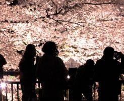 東京都内の夜桜デートスポット