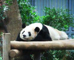 動物園デートのプランと時間配分